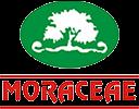 Moraceae Pharmaceuticals Pvt. Ltd.